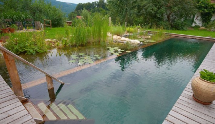 moss architect natural pool