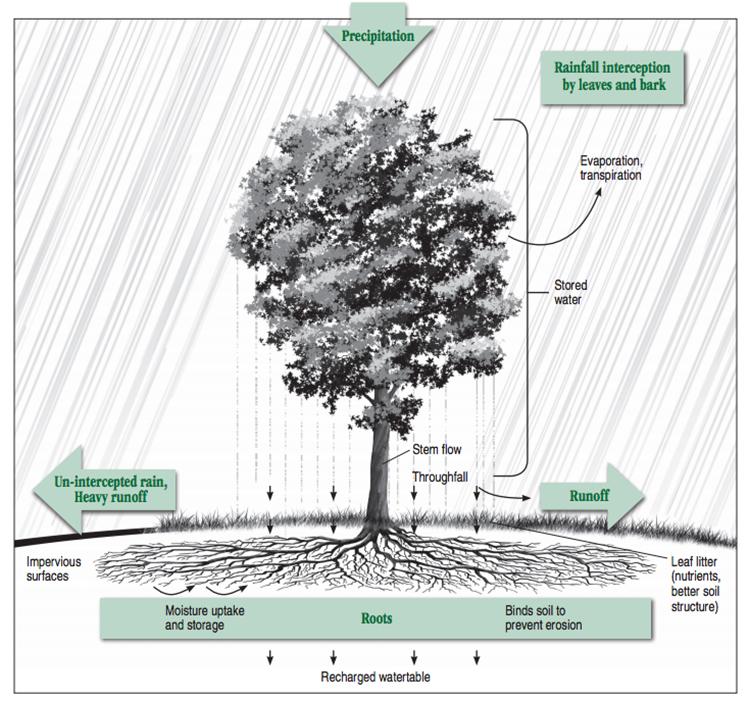 FPL tree_stormwater diagram