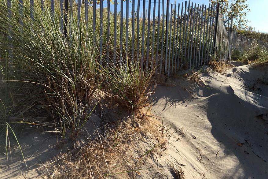 sandy edge