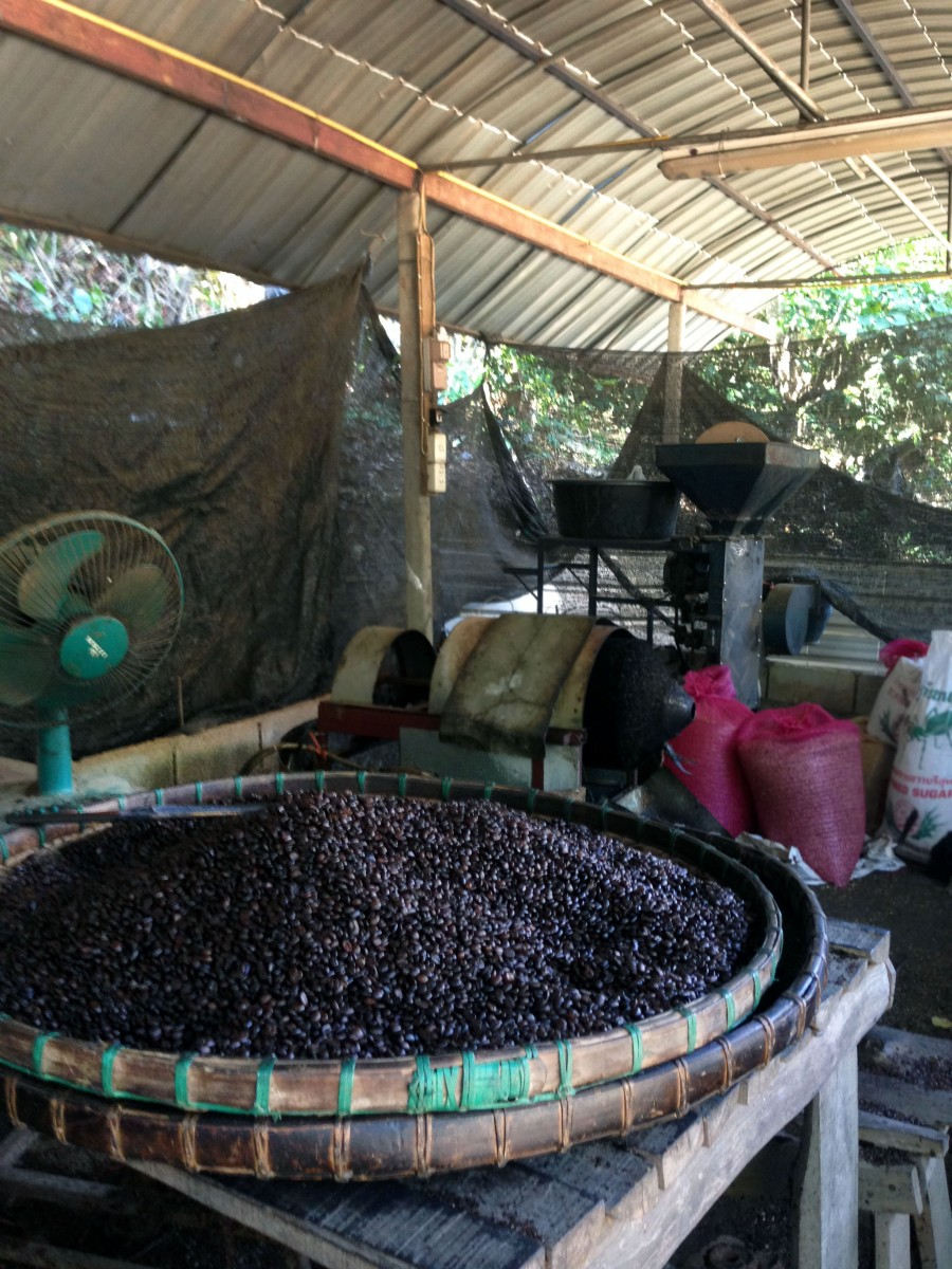 coffee plantation Thailand