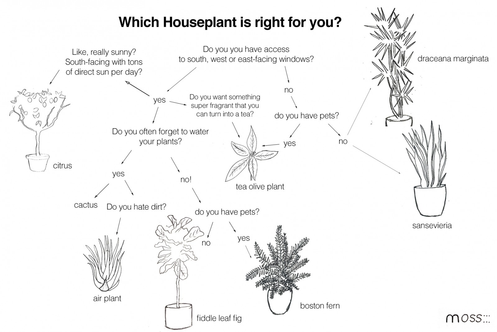 Erie flowchart create a flowchart a guide to houseplants what houseplant you should get moss design related gallery troubleshooting flowchart nvjuhfo Choice Image